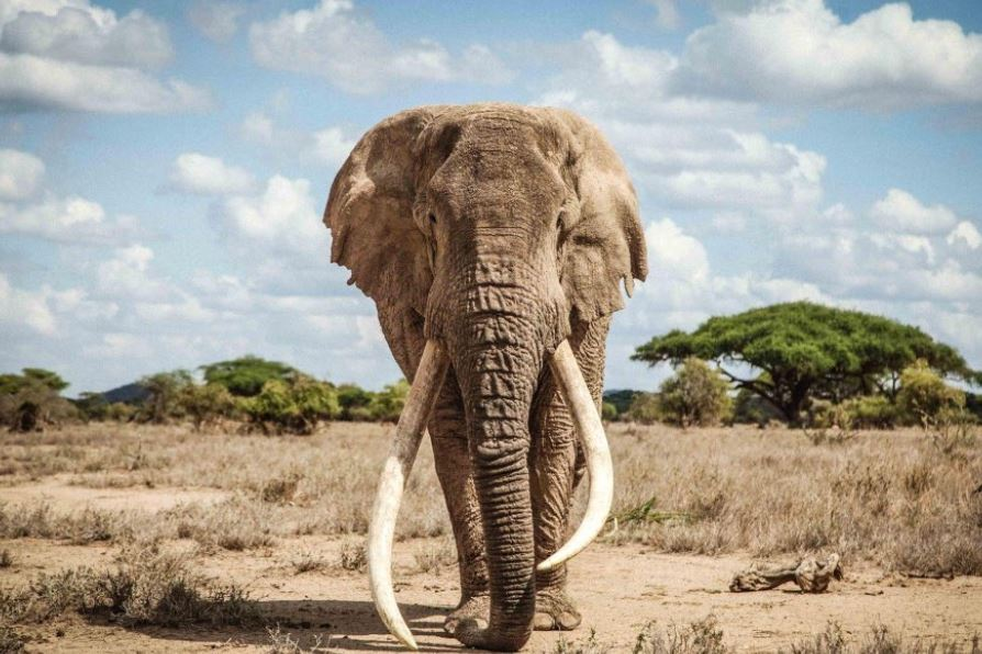 Amboseli National Park - Kenya - images