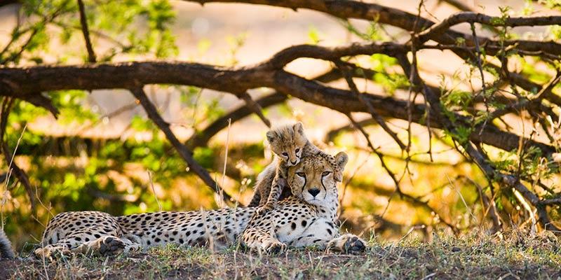 the-serengeti-national-park---tanzanian---images-conservation-area-serengeti-africa.jpg