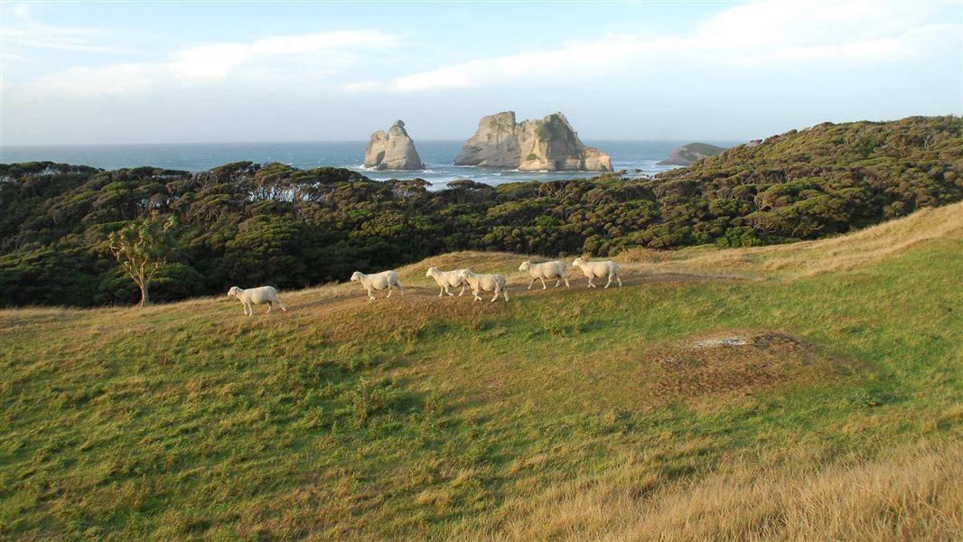 farewell-spit-and-puponga-farm-park----south-island---images-wharariki-beach-1920.jpg