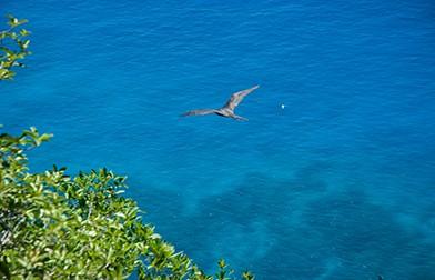 seychelles-island---images-seychelles-island---images_(3).jpg