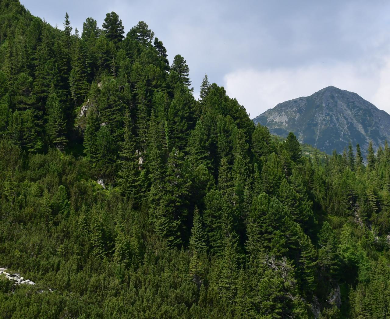 the-retezat-national-park---hunedoara---romania.u---images-the-retezat-national-park---hunedoara---romania_(3).jpg